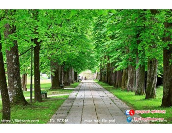 Tranh gạch 3d phong cảnh 546