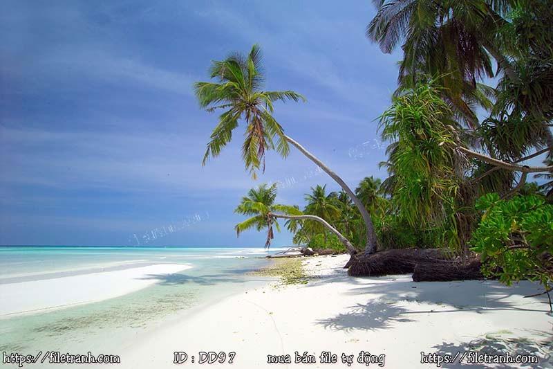 Tranh 3d đại dương cảnh biển 97