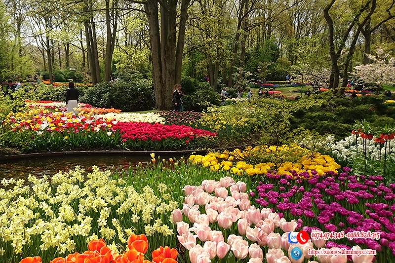 Tranh 3d vườn hoa tuy lip